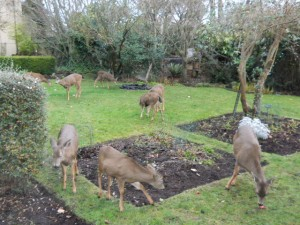 I ask the deer to make an appearance for breakfast but some times they do not listen.