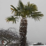 winter-wonderland-in-pt-jan-15-19-2012-042